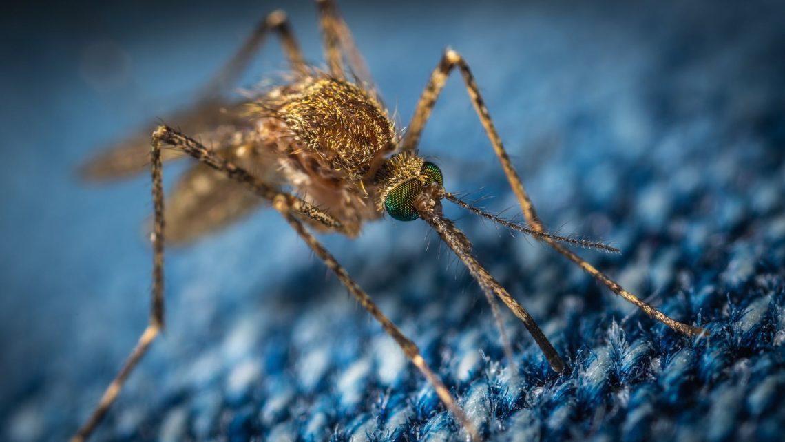 jaki olejek na komary?